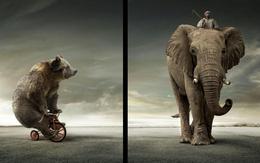 3d обои Цирк на свежем воздухе (мишка на трёхколёсном велосипеде, слон с наездником)  1680х1050