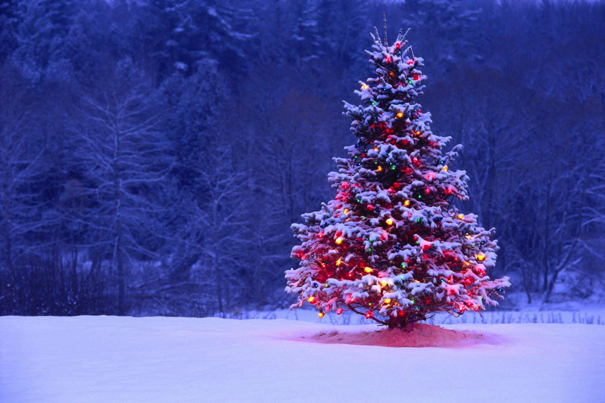 3d обои нарядная елка в лесу зима 41015