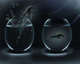 Wallpaper Dolphins in the aquarium drops