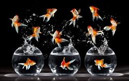 Dancing wallpaper goldfish drop