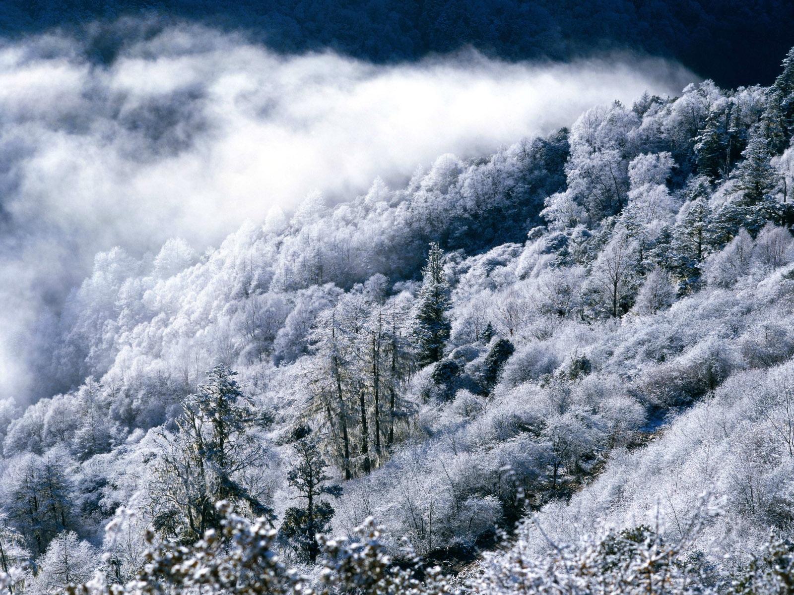 Мягкости и мохнатости зима 41028 зима