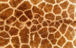 Leather Giraffe wallpaper 1920x1200