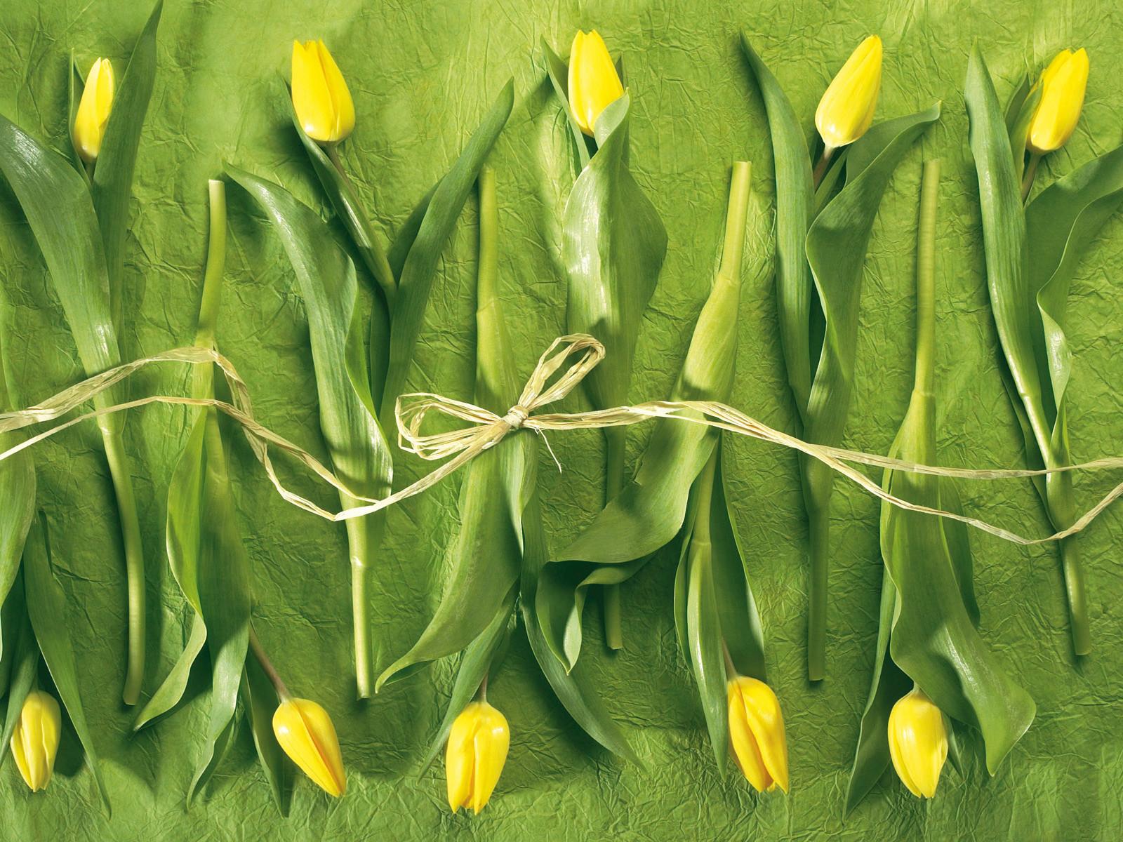 Фото цветов желтого с зеленым