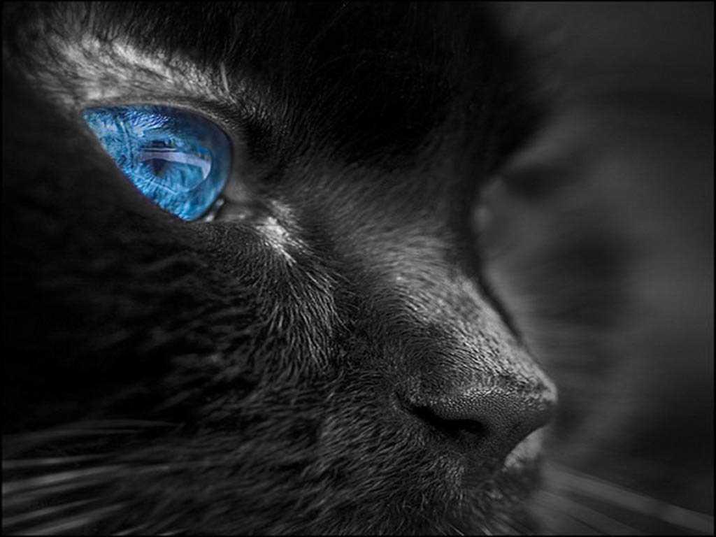 Шпалери кошеня чорно білі чорно білі