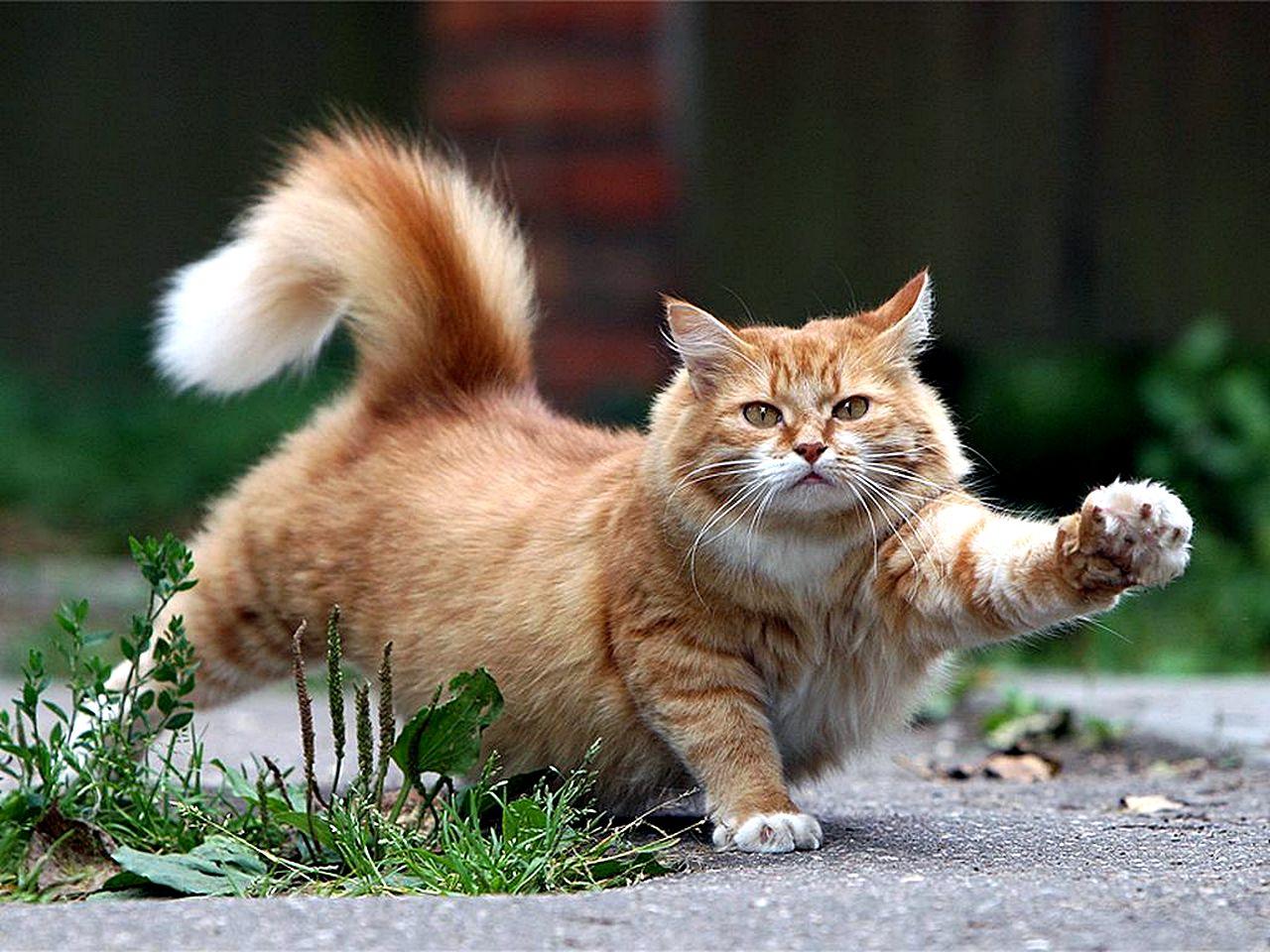 Сколько сисек у котов 21 фотография