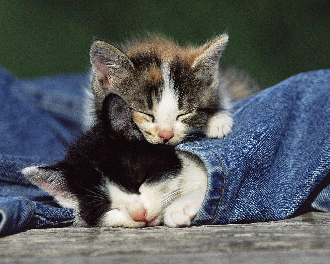 3d шпалери солодкий сон кошенят 1280х1024