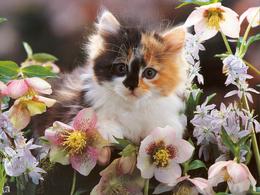 Kitten in flowers wallpaper 1024x768