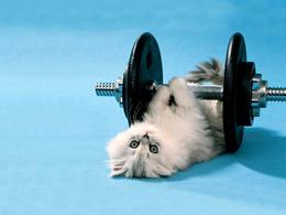 The kitten wallpaper 1024x768 exercising with dumbbells