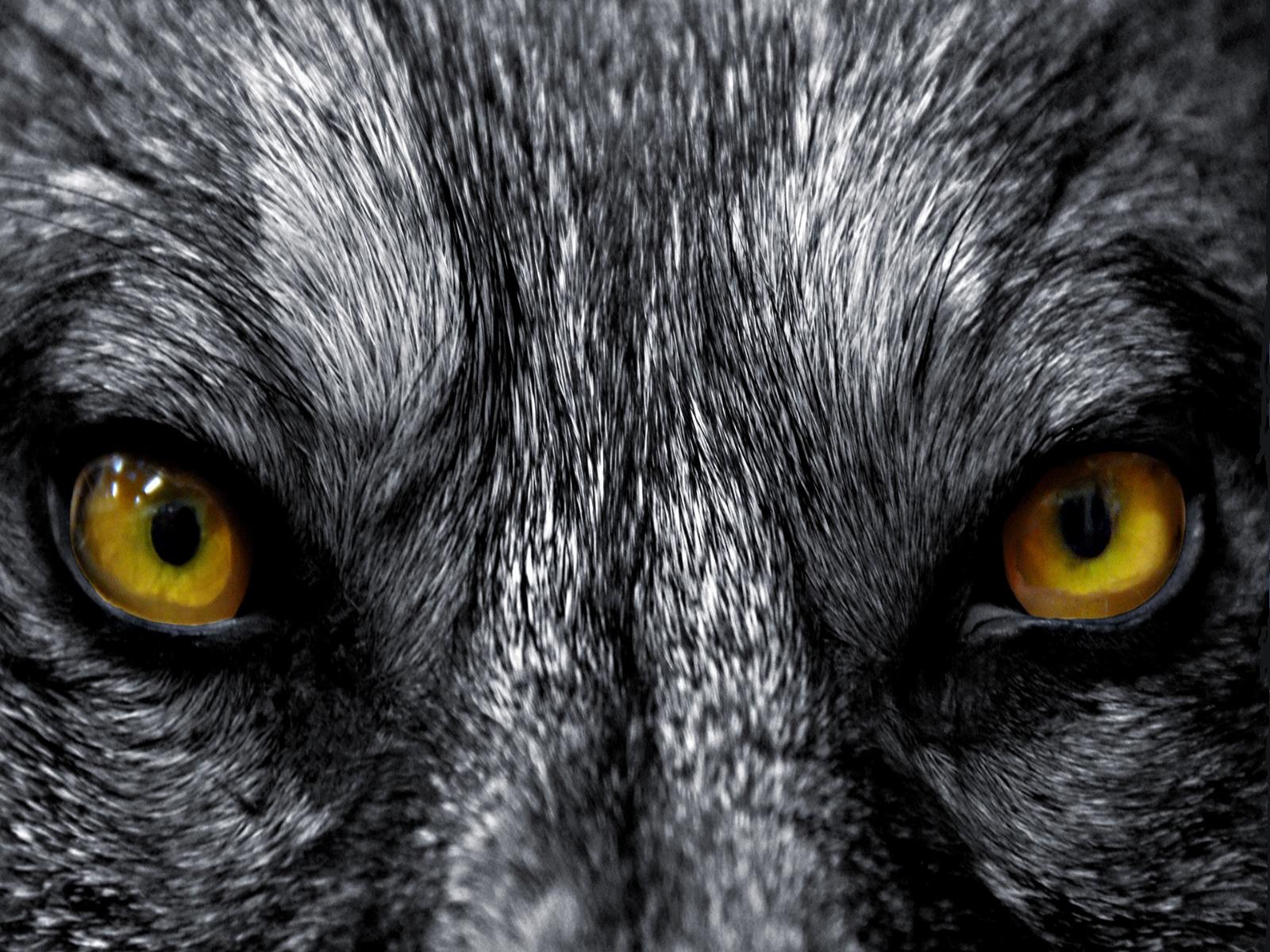 Картинка детская волк
