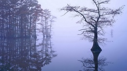 Flooded forest wallpaper 1920x1080 in the fog