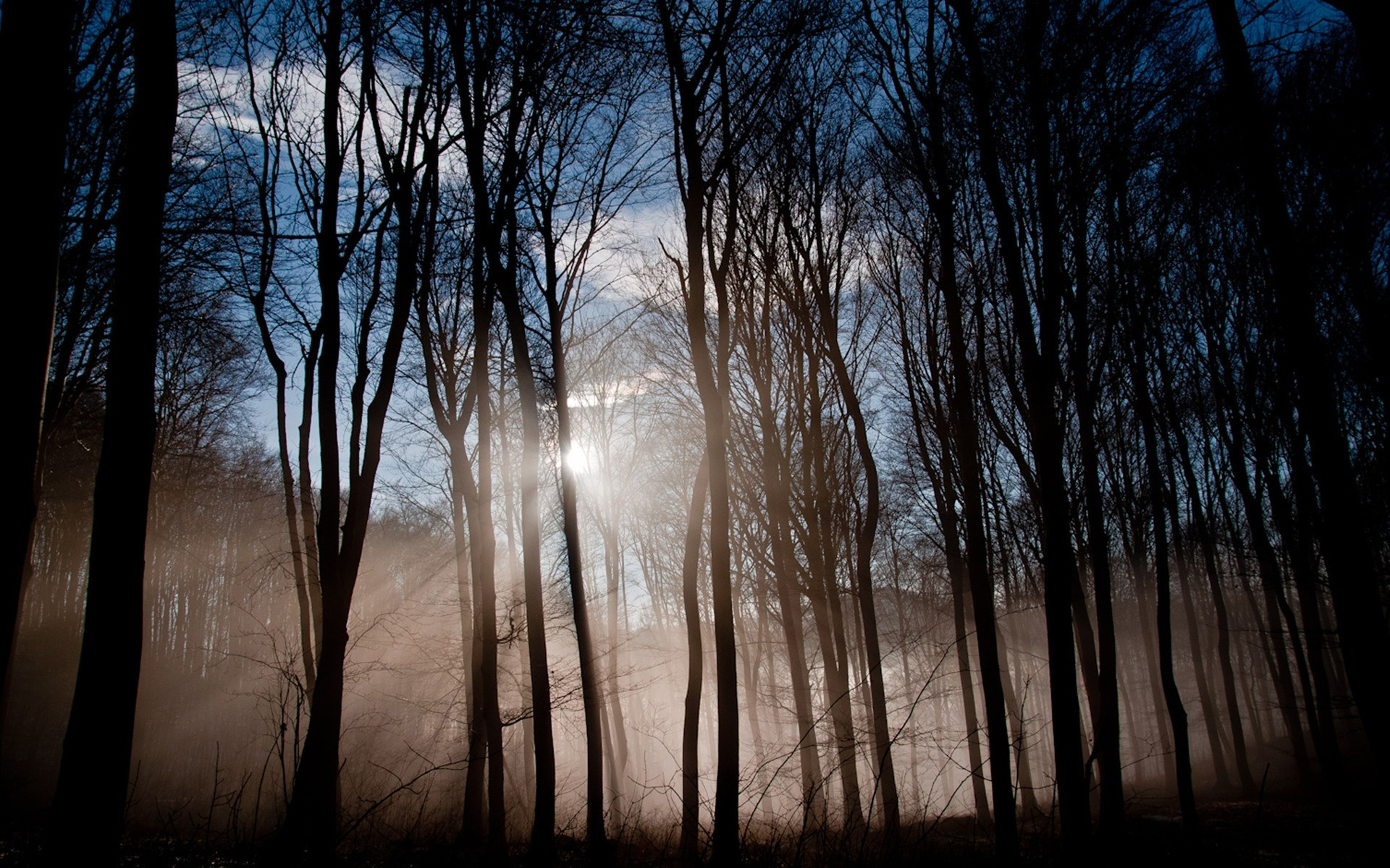 Dichter wald wallpaper wald im nebel wald