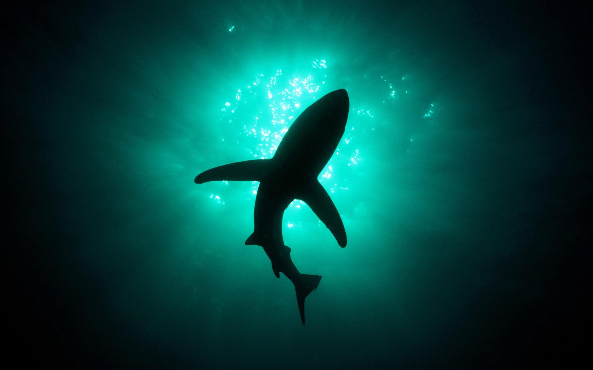 Awesome sea animals