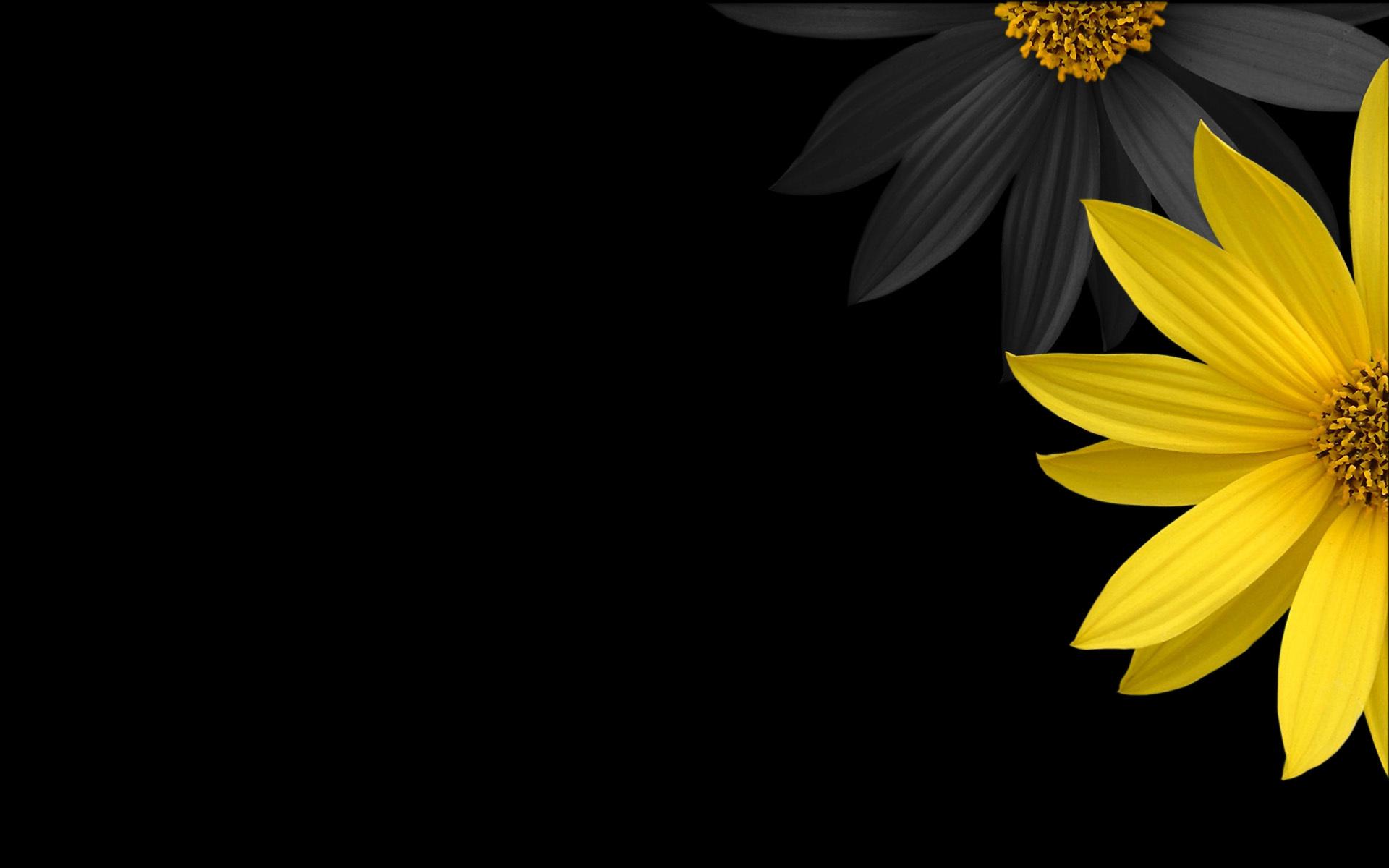 Wallpaper gelbe und schwarze blumen / flowers