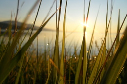Wallpaper Sunrise through the grass by the lake, with a dew water