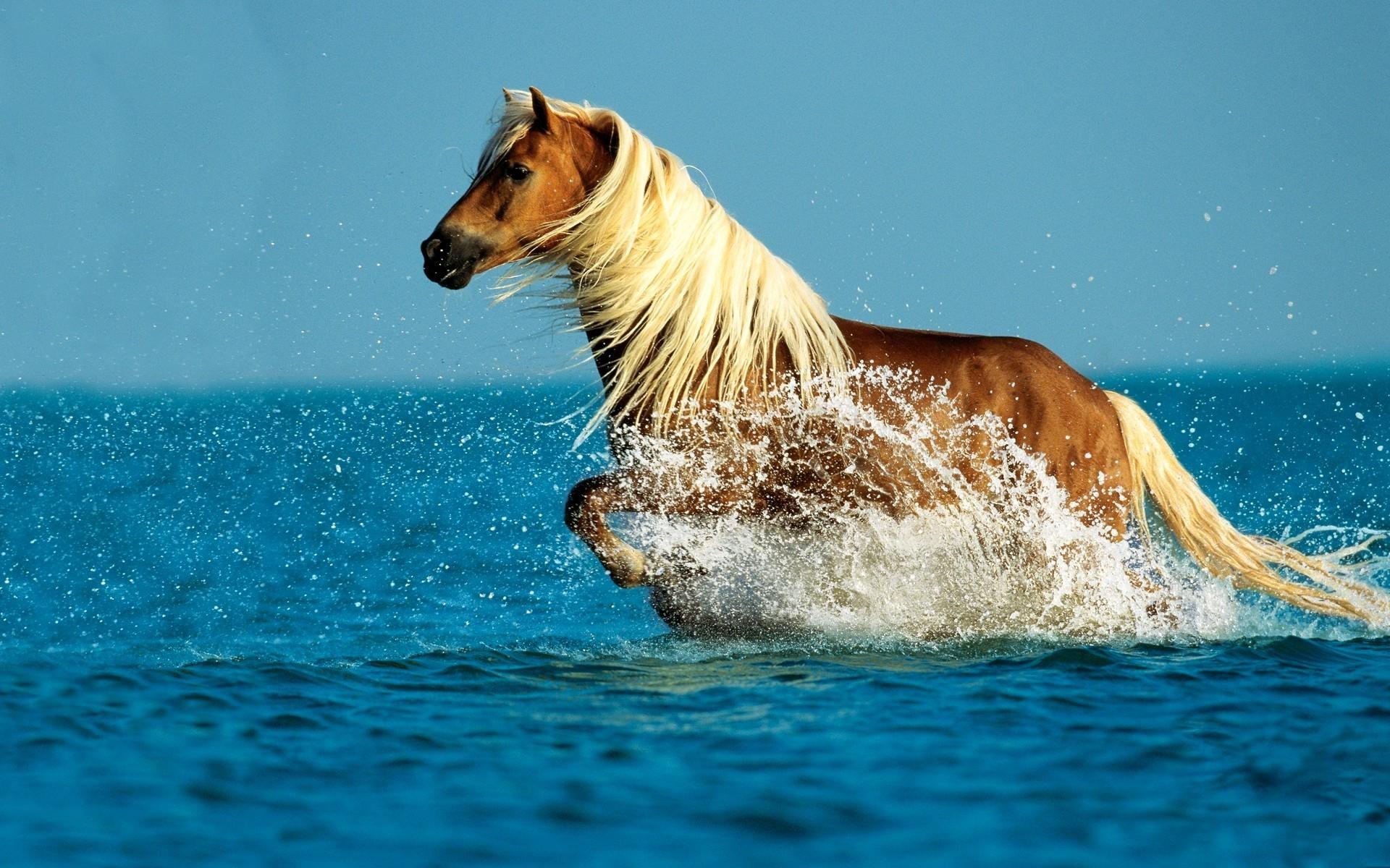 3d шпалери кінь біжить по воді 1920х1200