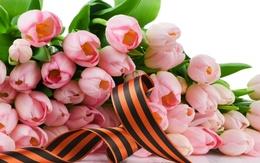 St. George Ribbon Tapeten und rosa Tulpen 2560x1600