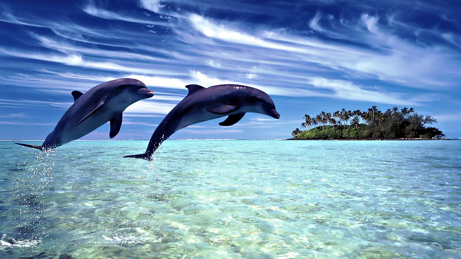 обои Дельфины прыгают над водой 1920х1080 ...: картинки-мира.рф/preview.php?p=9281