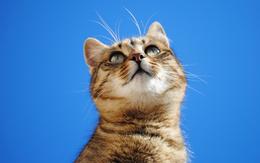 wallpaper Cat auf einem blauen Hintergrund 2560x1600