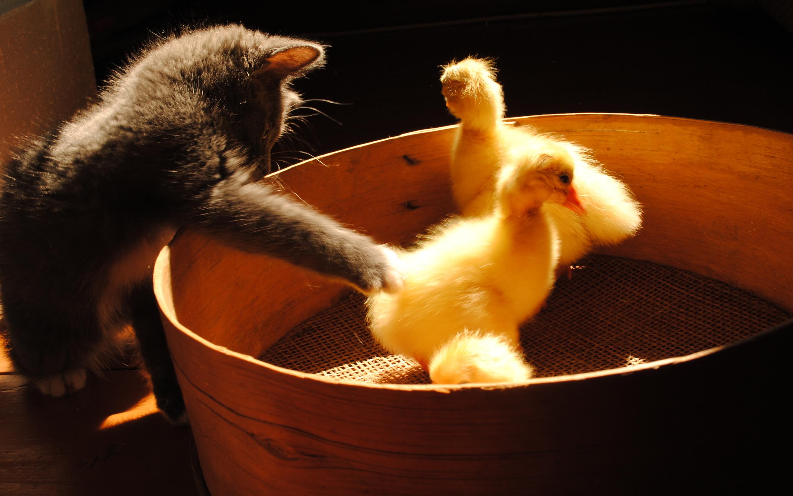 3d шпалери сірий кошеня і маленькі