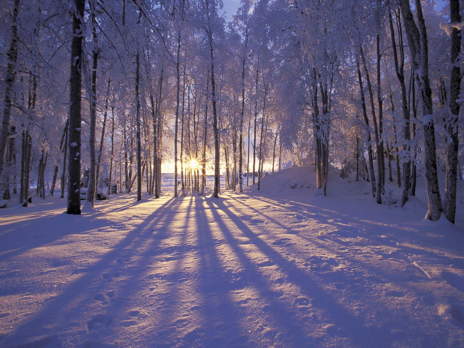 Скачати безплатно фото зими 16 фотография