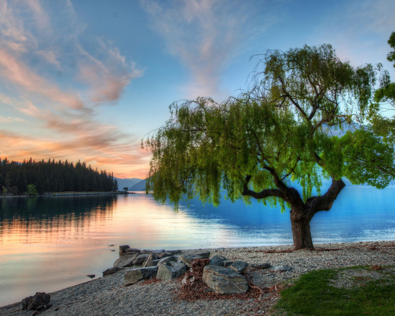 3d обои цветущее дерево на каменистом
